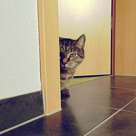 Projekt 52 / 08 Hinter der Türe